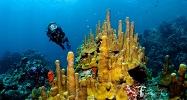 World Class Scuba Diving at a PADI 5 Star Dive Resort