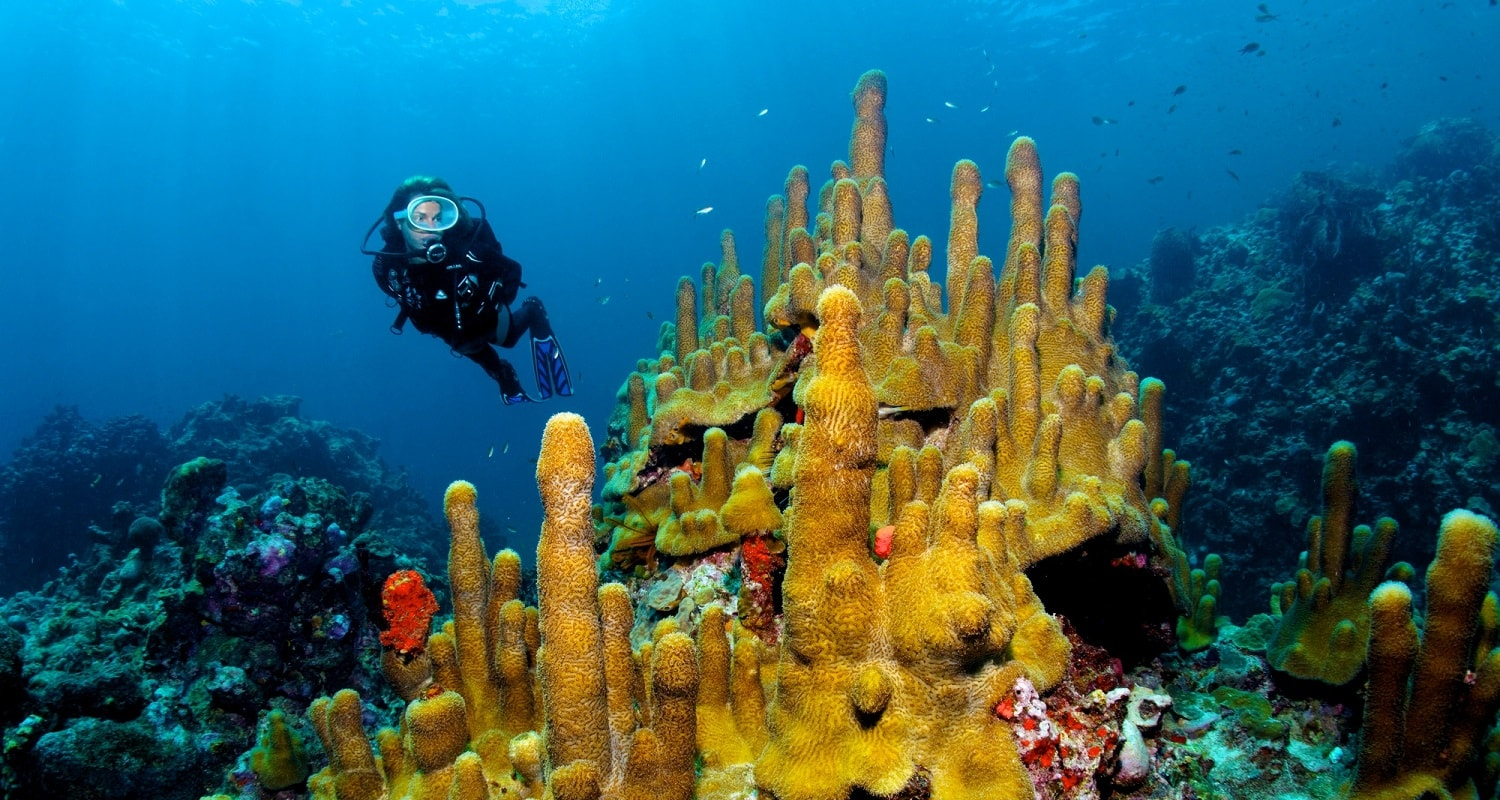 Scuba diving at anse chastanet resort st lucia - Padi dive locations ...